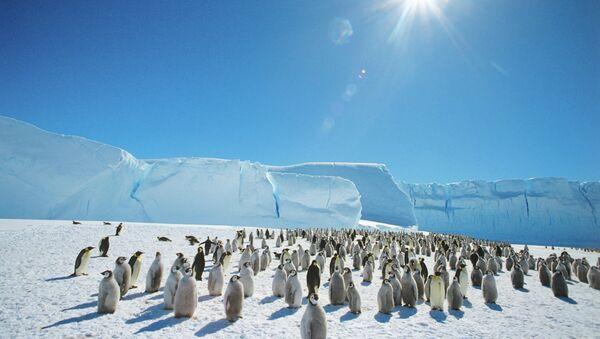 Císařští tučňáci v Antarktidě - Sputnik Česká republika