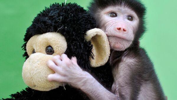 Opičí mládě s hračkou v zoo Maisura na jihu Indie - Sputnik Česká republika