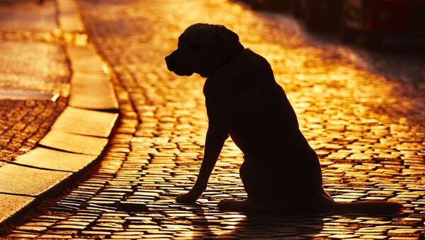 Pes na ulici - Sputnik Česká republika