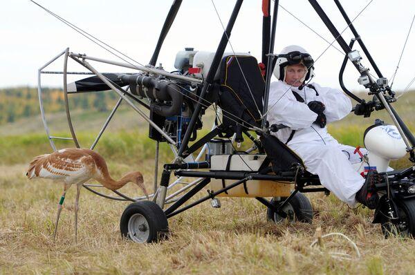 5. září 2012 se zúčastnil Vladimir Putin vědeckého experimentu v rámcí projektu Let naděje, jehož cílem je zachránění ohroženého druhu jeřábů.  - Sputnik Česká republika