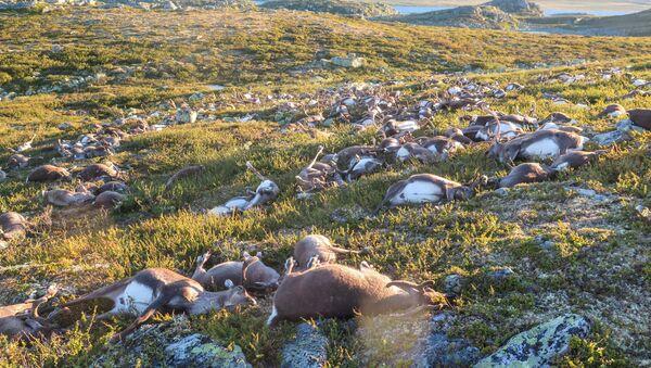 Mrtví jeleni - Sputnik Česká republika
