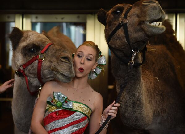 Účastnice Rockette Loren Renk stojí modelkou s velbloudy během požehnání zvířat v Radio City Christmas Spectacular. - Sputnik Česká republika