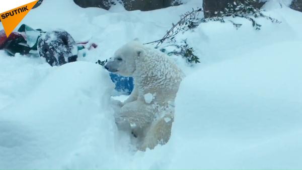 První sníh v oregonské zoo - Sputnik Česká republika