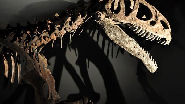 Kostra dinosauru. Ilustrační foto - Sputnik Česká republika