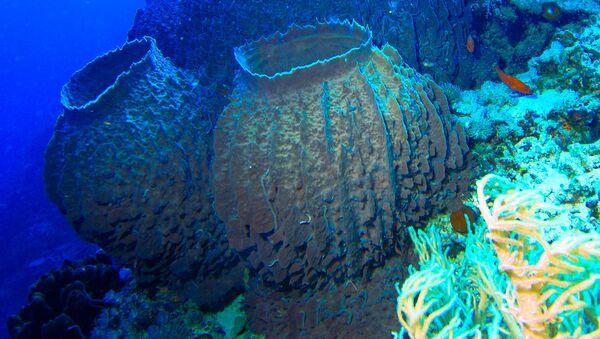 Mořské houby. Ilustrační foto - Sputnik Česká republika