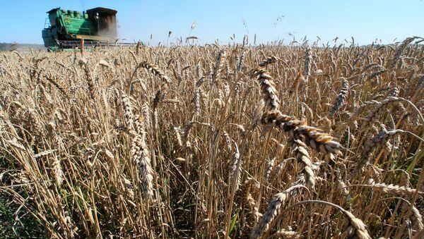 Sklizeň obilí v Kaliningradské oblasti - Sputnik Česká republika