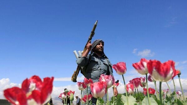 Afghánský policista během likvidace makových polí v provincii Džalálábád - Sputnik Česká republika