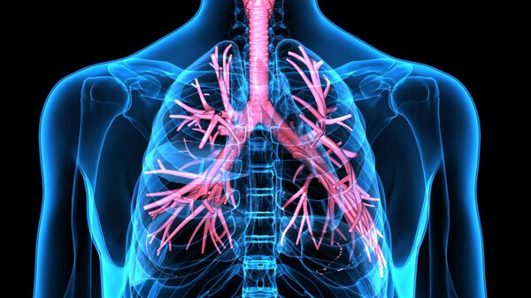 Dýchací ústrojí člověka - Sputnik Česká republika