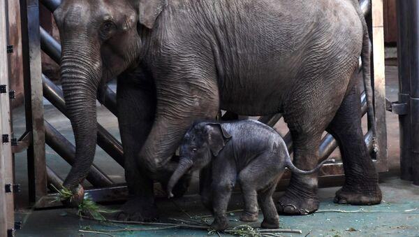 Novorozeně asijského slonu v Moskevské zoo. Ilustrační foto - Sputnik Česká republika