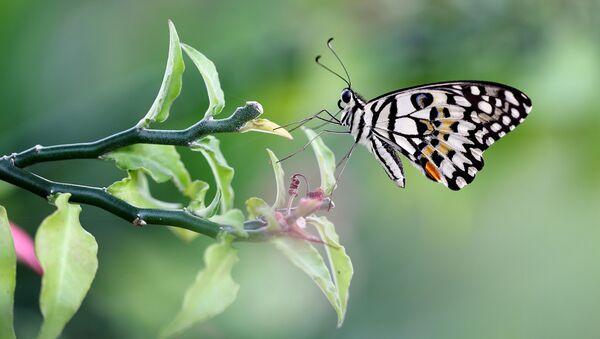 Motýl - Sputnik Česká republika