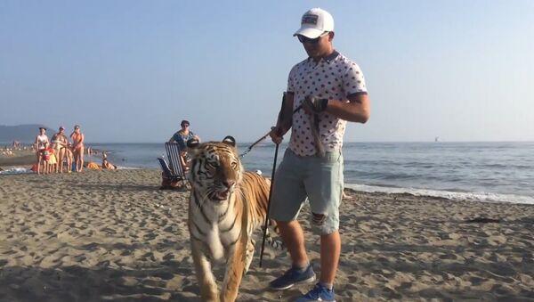 Tigřice Magda se prochází po pláži - Sputnik Česká republika