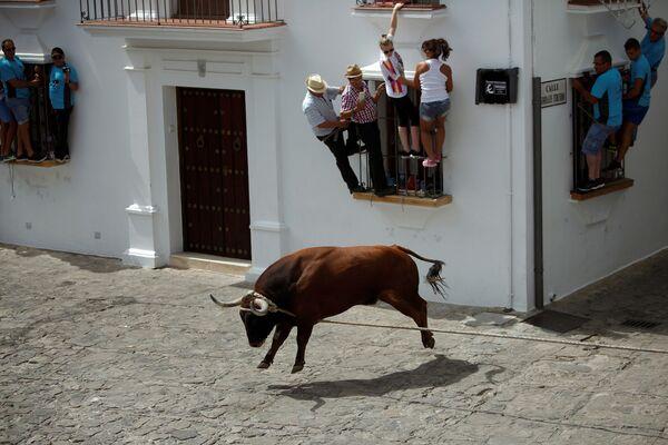 Tradiční zábava Býk na provázku během každoročního festivalu v španělském městě Grazalema - Sputnik Česká republika