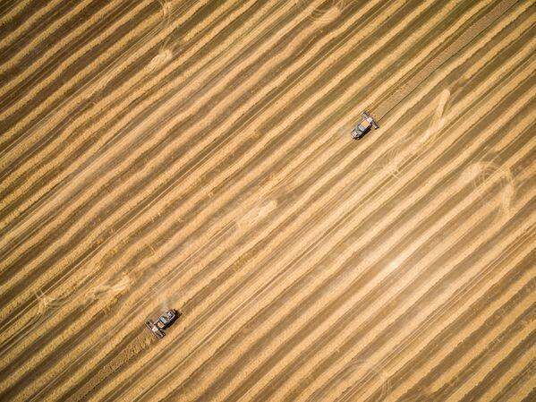 Sklizení pšenice v Krasnodarském kraji - Sputnik Česká republika