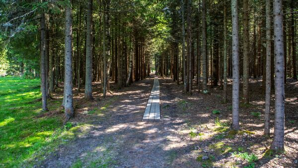 Les v Rusku. Archivní foto - Sputnik Česká republika