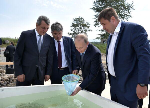 Ruský prezident Vladimir Putin se během návštěvy Bajkalské státní přírodní rezervace zúčastnil ceremonie vypuštění mláďat omulů do jezera - Sputnik Česká republika