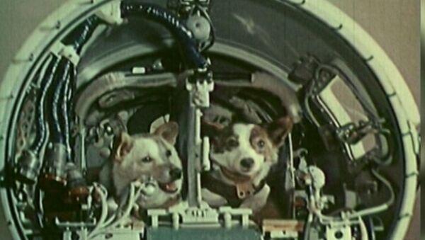 Kosmičtí pejsci: Před 57 lety se Bělka a Strelka vydali do vesmíru - Sputnik Česká republika
