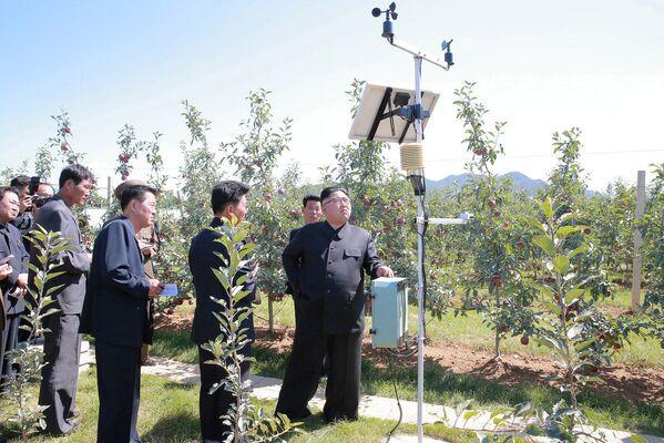 Kim Čong-un v ovocné zahradě - Sputnik Česká republika