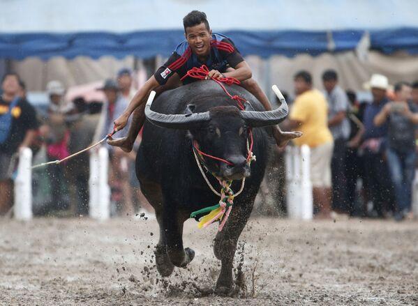 Účastník tradičních závodů na buvolech v Thajsku - Sputnik Česká republika