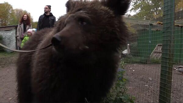 U Čeljabinsku zachránili medvědici - Sputnik Česká republika