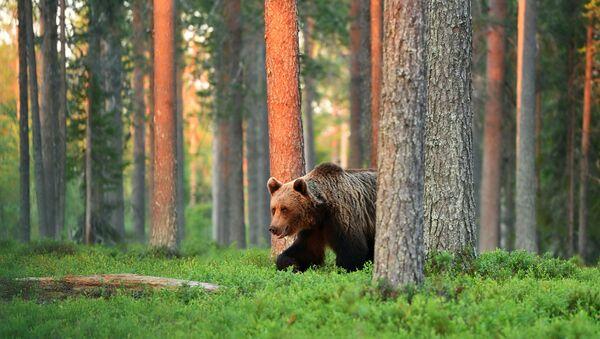 Medvěd v lese - Sputnik Česká republika