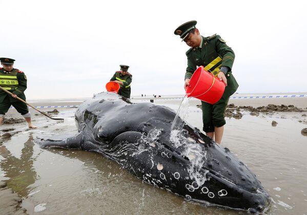 Čínští policisté polévají vodou velrybu, jež se vyhodila na břeh v městě Cidun - Sputnik Česká republika