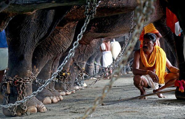 Honák se stará o slony během každoročního festivalu Vrischikolsavam v Indii - Sputnik Česká republika
