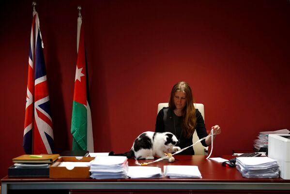 Vice-velvyslankyně Velké Británie v Jordánsku Laura Daubanová si hraje s Lawrencem Abdunským – prvním oficiálním kocourem velvyslanectví - Sputnik Česká republika