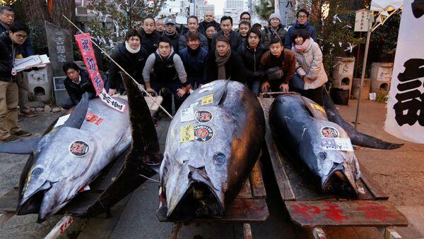 Tuňák modroploutvý - Sputnik Česká republika