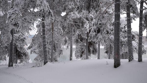 Zasněžené stromy - Sputnik Česká republika