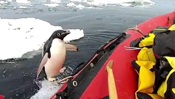 """Na Antarktidě natočili, jak tučňák """"navštívil"""" vědce - Sputnik Česká republika"""
