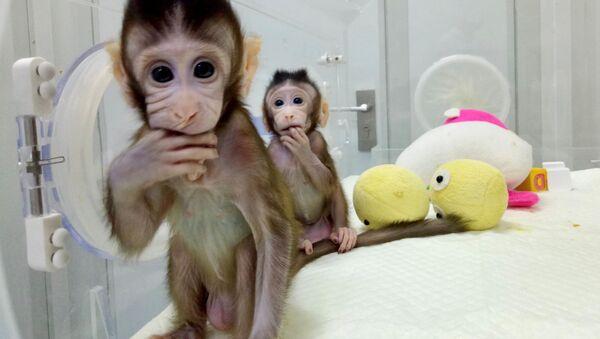 Klonované opice Zhong Hua a Hua Zhong - Sputnik Česká republika