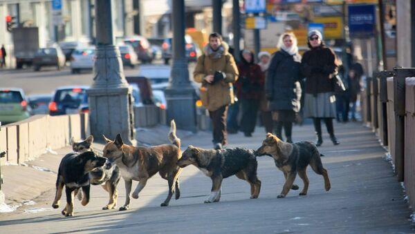 Psi na ulici v Moskvě - Sputnik Česká republika