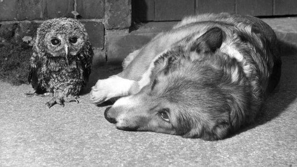 Pes a sova - Sputnik Česká republika
