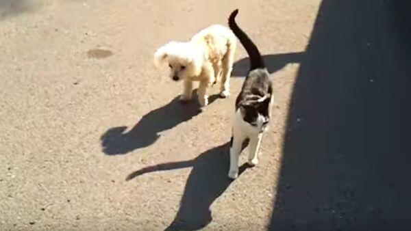 Kočka pomáhá slepému štěněti - Sputnik Česká republika
