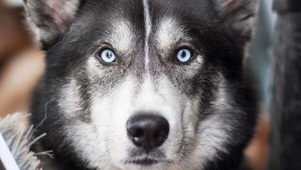 Pes. Ilustrační foto - Sputnik Česká republika