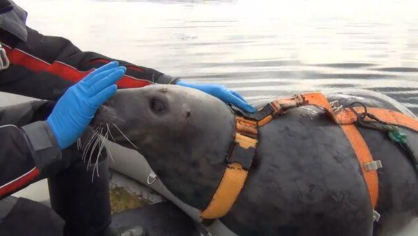 Vojenští tuleni toho umí docela hodně - Sputnik Česká republika