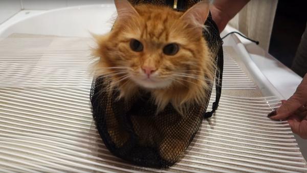 Zrzavá kočka ukazuje kočkoplavky v akci - Sputnik Česká republika