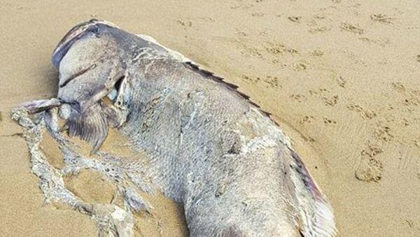 Obrovský mořský tvor nalezli na pláži v parku Moure - Sputnik Česká republika