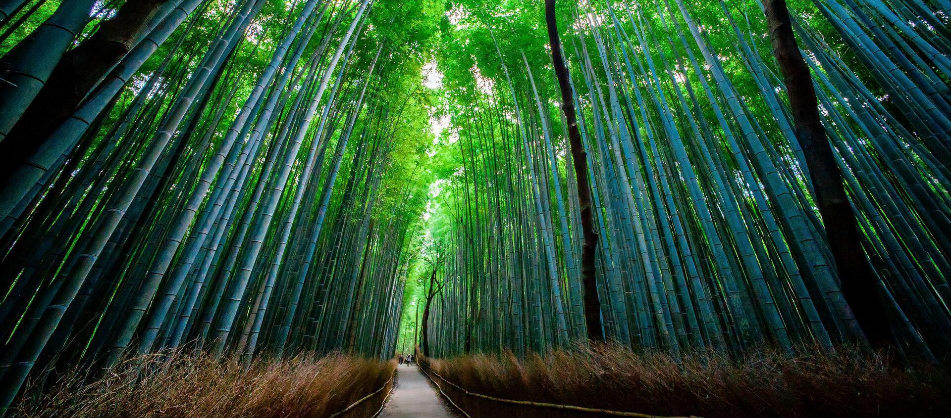 Bambusový les Sagano v Japonsku - Sputnik Česká republika, 1920, 06.04.2021