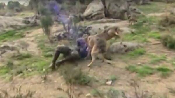Španělský Mauglí se chce vrátit k vlkům, protože je zklamán lidmi (VIDEO) - Sputnik Česká republika