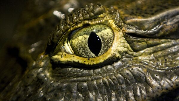 Oko krokodýla - Sputnik Česká republika