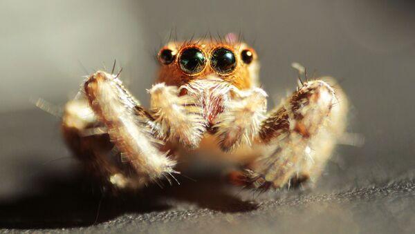 Pavouk, jeden z velmi rozšířených členovců - Sputnik Česká republika
