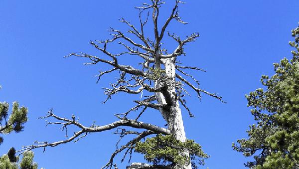 Дерево из парка Поллино - Sputnik Česká republika