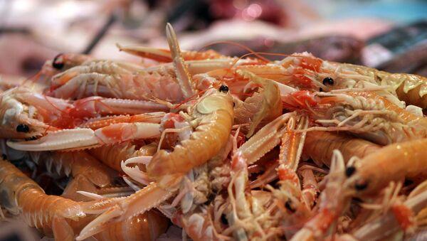 Krevety. Ilustrační foto - Sputnik Česká republika