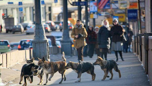 Toulavé psy v Moskvě - Sputnik Česká republika