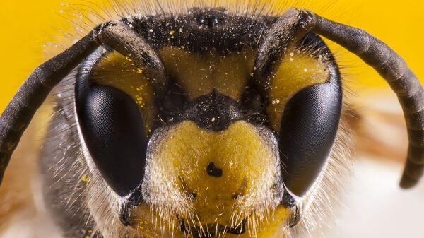 Včela - Sputnik Česká republika