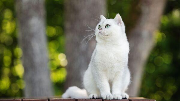 Kočka. Ilustrační foto - Sputnik Česká republika