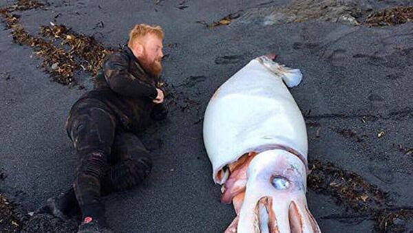 Krakatice nalezená nedaleko Wellingtonu - Sputnik Česká republika