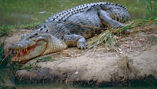 Krokodýl - Sputnik Česká republika