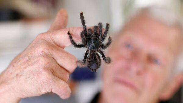 Francouzský chovatel pavouků. Ilustrační foto - Sputnik Česká republika